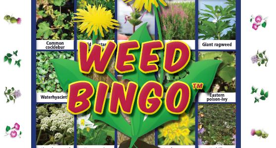 Weed Bingo